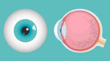 Córnea - D'Olhos Hospital Dia