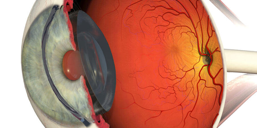 Retina e Vítreo - D'Olhos Hospital Dia