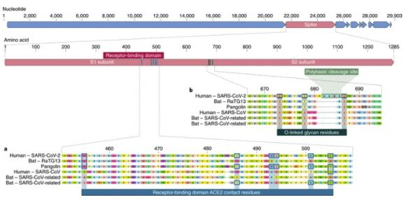 The proximal origin of SARS-CoV-2 - D'Olhos Hospital Dia